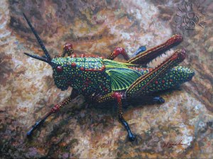 InsectGrasshopper
