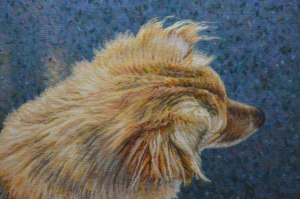 canine-overview-det1-2000